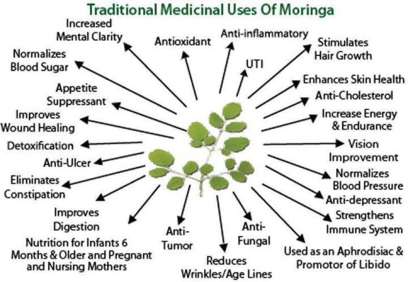 Moringa benifit chart